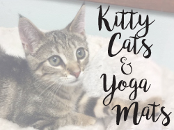Kitty cats and yoga mats workshop